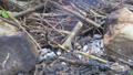 タイムラプス たき火 微速度撮影の動画 34904935