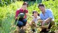 家族 農業 畑の動画 34954101