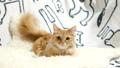 แมว,สัตว์,สัตว์ต่างๆ 35070100