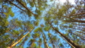High angle view of rotating pine trees in forest 35134854