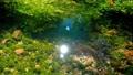 水草 川魚 ニジマスの動画 35139010