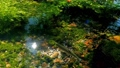 水草 川魚 ニジマスの動画 35139011