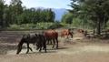 9月 木曽馬の里放牧場 35148488
