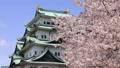 4月 桜の名古屋城 35148492