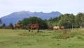 9月 秋の木曽馬の里 35148493