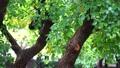 雨 葉っぱ 木の動画 35152222
