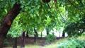 雨 葉っぱ 木の動画 35152224