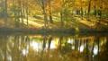 autumn, lake, forest 35161438