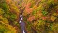 中津川渓谷 紅葉 風景の動画 35165384