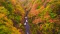 中津川渓谷 紅葉 風景の動画 35165386