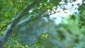 葉 新緑 緑の動画 35183853