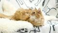 แมว,สัตว์เลี้ยง,เตียง 35260612