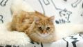 แมว,สัตว์เลี้ยง,เตียง 35260620