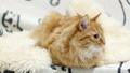 แมว,สัตว์เลี้ยง,เตียง 35260681