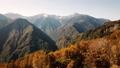 Autumn leaves of Yasha Shinto 35339006