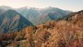 Autumn leaves of Yasha Shinto 35339011