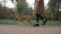 Low view of anonymous woman walking a dog in park 35352658
