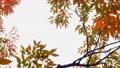 ใบไม้เปลี่ยนสี 35391697