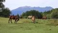 9月 秋の木曽馬の里 35468237