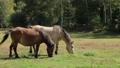 9月 秋の木曽馬の里 35468242