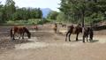 9月 木曽馬の里放牧場 35468244