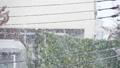 雪 降雪 降るの動画 35542245
