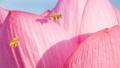 蓮 花 植物の動画 35605270