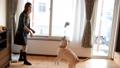 犬と女性 犬 女性 キャッチ ラブラドール ペット 家族 ライフスタイル 戌年 35612597