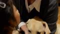 犬と女の子 犬 女の子 ソファ ラブラドール ペット 家族 ライフスタイル 戌年 35612918