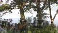 琵琶湖畔の水面とハンノキ 35636329