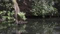 池山水源の湧水池 35636336