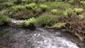 池山水源の流れと植物 35636338