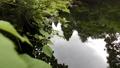 緑の葉と山吹水源の湧水池 35636339
