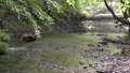 新緑と阿蘇野川の流れ 35636340