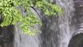 名水の滝をバックに新緑 35636342