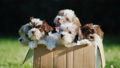 Box with cute little puppies. It is standing on a 35681485
