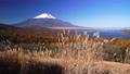 パノラマ台のススキと新雪の富士山 35697915