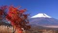 パノラマ台より新雪の富士山 35697919