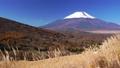 パノラマ台のススキと新雪の富士山 35697920
