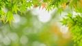 秋天叶子新绿色 35724456