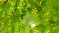 秋天叶子新绿色 35727856