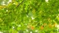 秋天叶子新绿色 35727857