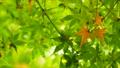 秋天叶子新绿色 35727864