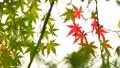 秋天叶子新绿色 35727866