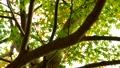 foliage, leaf, leafs 35727871