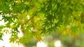 foliage, leaf, leafs 35727872