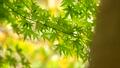 foliage, leaf, leafs 35727873