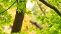 foliage, leaf, leafs 35727874