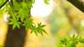 foliage, leaf, leafs 35727875
