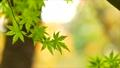 foliage, leaf, leafs 35727876
